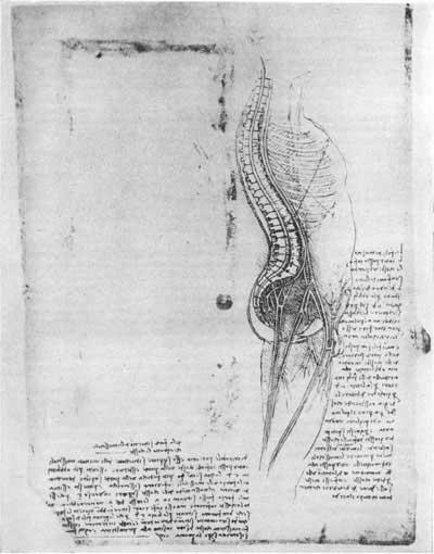 Леонардо да Винчи, рис. 77 в [16.52]