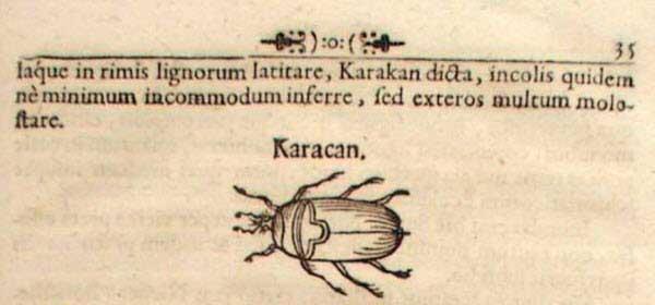Бернгард Таннер. Изображение таракана в тексте издания записок, 1678